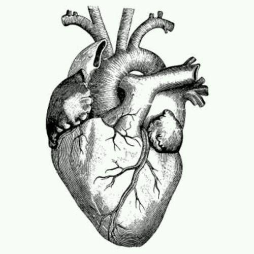20 best when calls the heart images on Pinterest | Corazón anatómico ...