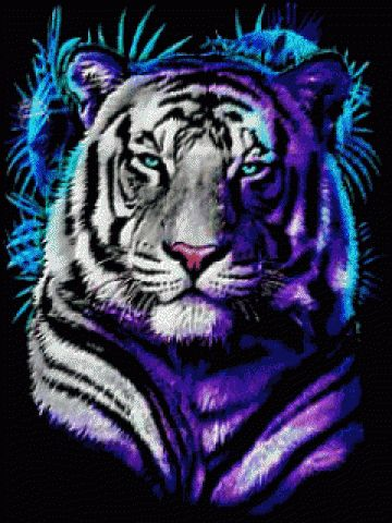 White Tiger With Blue Eyes Wallpaper