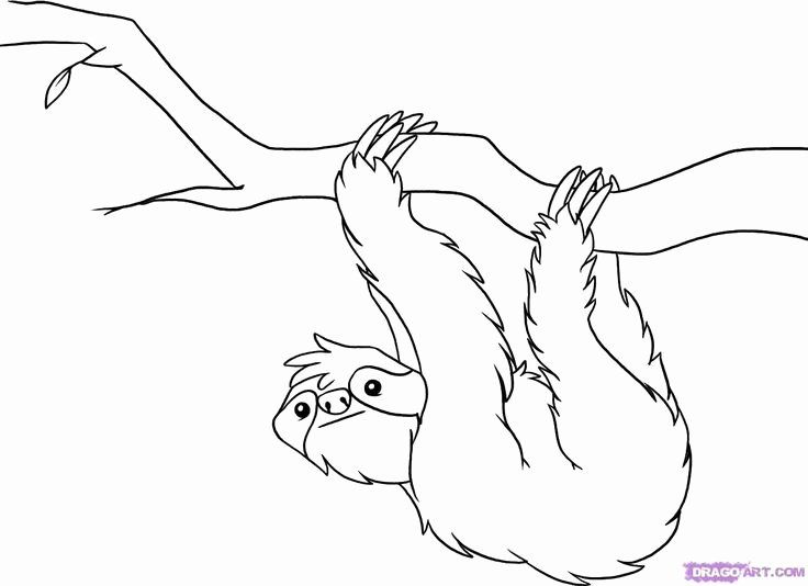 Rainforest Animals Coloring Page Awesome 23 Best Images About Rainforest On Pinterest In 2020 Rainforest Animals Animal Coloring Pages Sloth Art