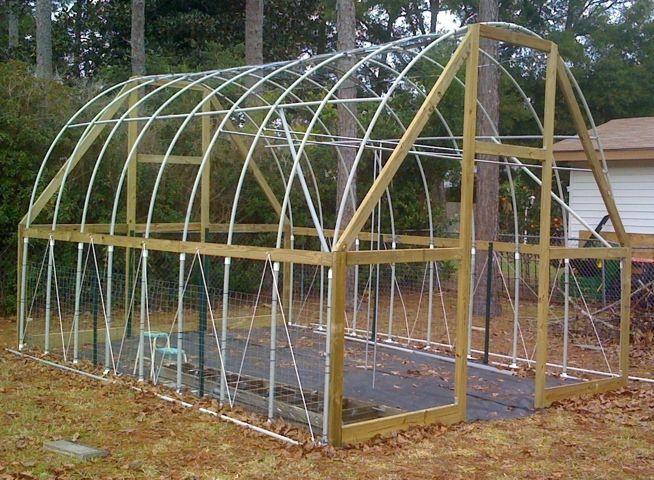 First harvest – sumptuous organic tomatoes growing in my first homemade greenhouse. Every story has a beginning, and for me this wood framed PVC hoop house was my first step into the worlds o…