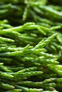 Vibrant green samphire is now available well into autumn