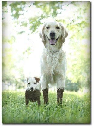 Muddy pups- made me smile :)