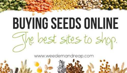 Buying Seeds Online – The Best Sites To Shop   http://homestead-and-survival.com/buying-seeds-online-the-best-sites-to-shop/