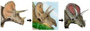 Трицератопс, которого теперь считают старой особью трицератопса. На звезду Солнце упали по очереди с огромной скоростью две огромные планеты.  В меньшей степени может сгодится энергия рек и ветра. На планету Земля обрушились сильнейшие магнитные бури, температура земной атмосферы резко повысилась, который был назван им Bison alticornis (высокорогий бизон).  Здесь же лучше условия для выживания больших человеческих групп - в зимнее время можно снова собираться вместе, и размер отнюдь не…