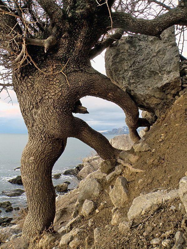 un árbol se aferra a la vida.