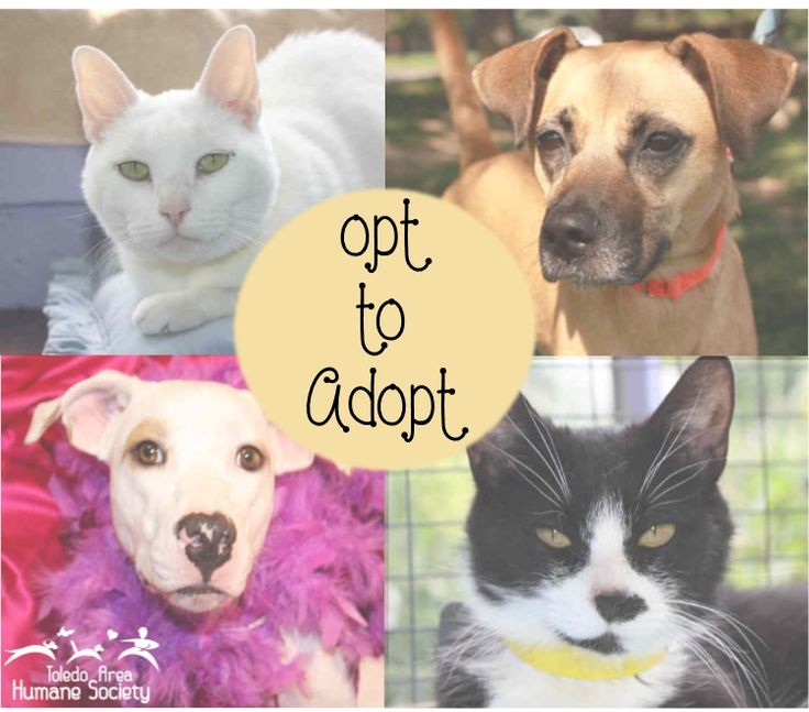Adopt a pet from the Toledo Area Humane Society!