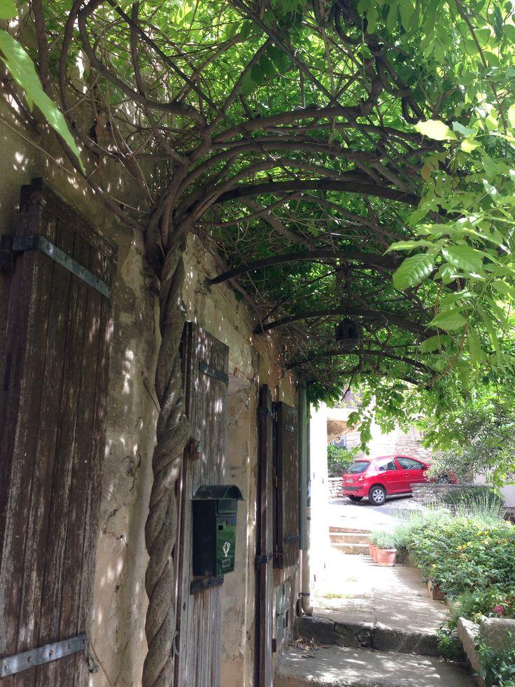 Die 25 besten ideen zu glyzine auf pinterest blumenbaum for Gartengestaltung chinesisch