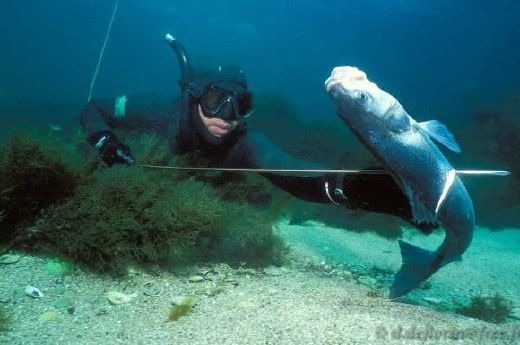 La chasse sous-marine en Provence : les premiers mètres