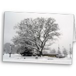 Gorgeous giant oak tree covered in snow creating a beautiful silhouette and lines.