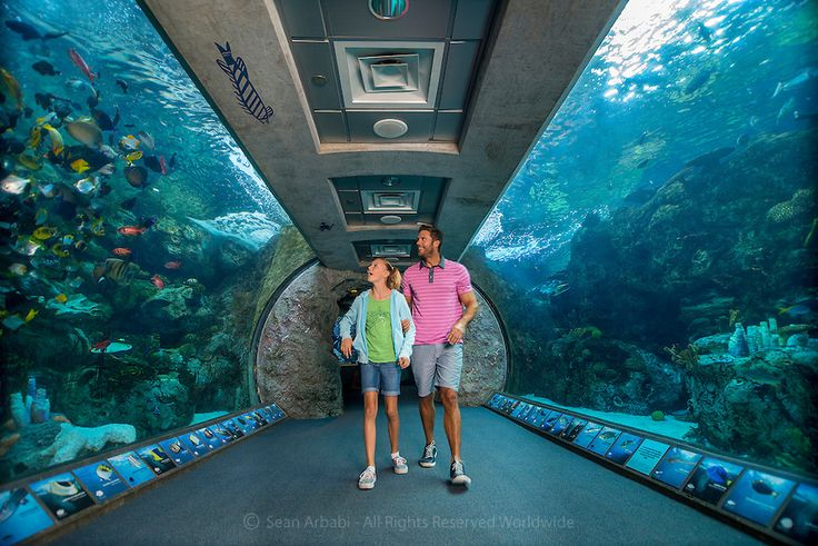 USA: California: Los Angeles County: Long Beach: Aquarium of the Pacific: Father and daughter enjoy the big tank at the Shark Lagoon, the exhibit including several species of the oceans' top predators (aquariumofpacific.org; 100 Aquarium Way, Long Beach, CA 90802) - © Sean Arbabi | seanarbabi.com (all rights reserved worldwide)