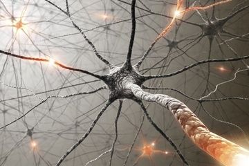 Brain cells can live at least twice as long as the organisms in which they reside, according to new research.    The study, published today (Feb. 25) in the journal Proceedings of the National Academy of Sciences, found that mouse neurons, or brain cells, implanted into rats can survive with the rats into old age, twice as long as the life span of the original mice.