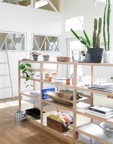 Open shelving with cactus.
