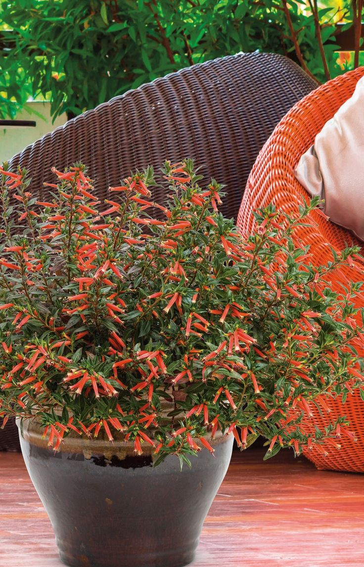 Best 25 the hummingbird ideas on pinterest - Potted autumn flowers ...