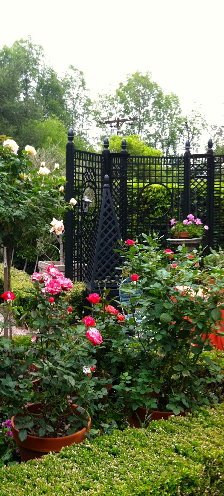 French tuteur trellis woodworking projects amp plans - Designer Joe Ruggiero S Rose Garden Accents Hair Hair Of France