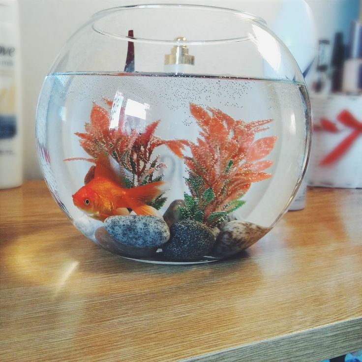 cute and awesome on PicsSAE  http://picssae.com?social-gallery-image=my-goldfish-3