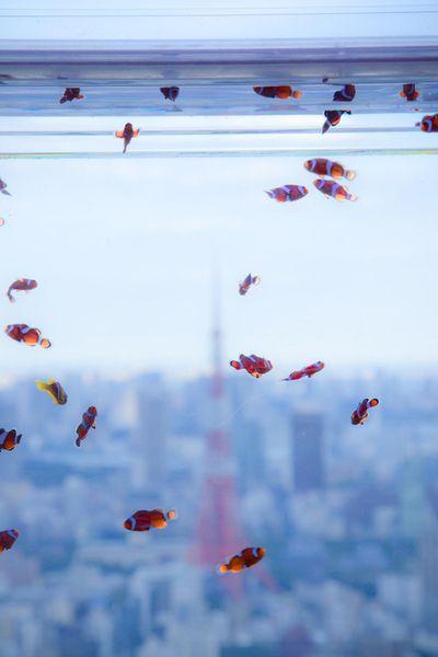 hmmm fish