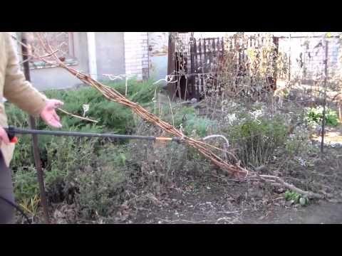 Железный купорос: применение в садоводстве. Инструкция по применению: обработка (опрыскивание) садовых деревьев железным купоросом весной и осенью. Где купить?