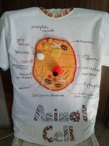 Animal Cell Diagram Project: Make An Animal Cell T-shirt
