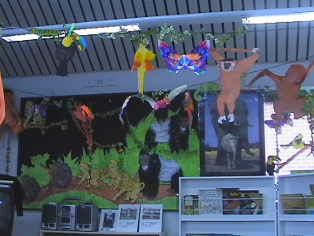 Some of our rainforest animals on display  Thankyou to m EA, DF