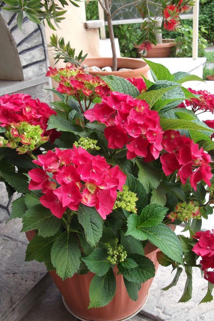 ΑΓΡΟΛΟΓΙΟ: Καλλωπιστικά φυτά