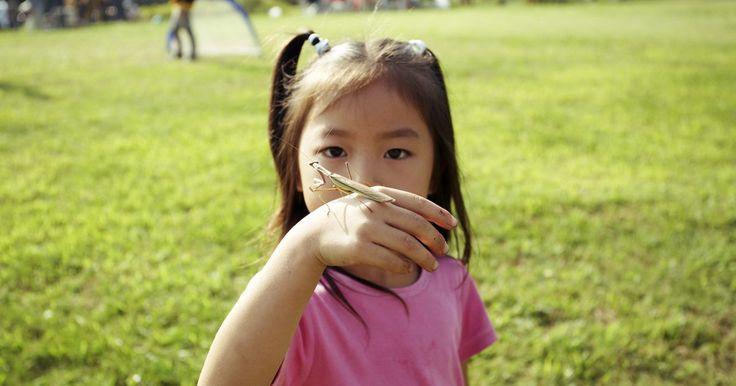 Características de los seres vivos para pequeños del jardín de niños. Una unidad importante en el currículum de ciencia de la mayor parte de los jardines de niños es la que tiene que ver con la exploración de los seres vivos. Una vez que los niños pueden identificar cuáles son estos (plantas y animales), están listos para descubrir sus características y necesidades básicas. La instrucción en las ciencias y la ...