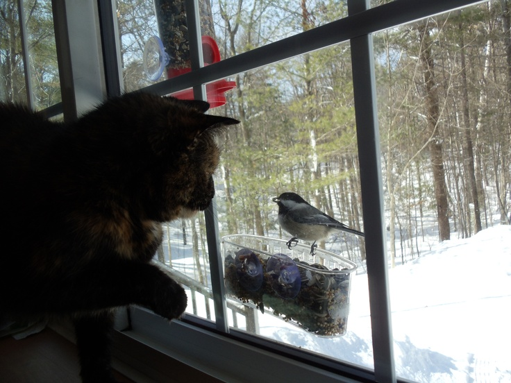 I made a bird feeder out of a shower soap dish from the dollar store so Mitty can meet new friends