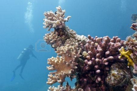 arrecife de coral con corales blandos y duros y buceo Foto de archivo