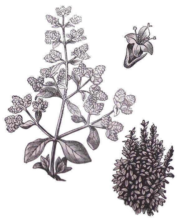 Mejores 55 imgenes de Ilustracion plantas en Pinterest  Plantas