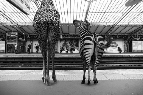 Expo Animétro par Clarisse Rebotier et Thomas Subtil jusqu'au jeudi 17 avril Millesime Gallery 41, avenue de la Bourdonnais – 75007 Paris #photo #paris