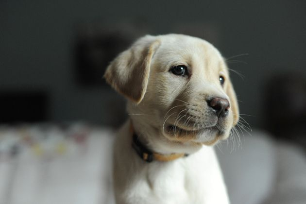 """""""Taking Puppy Pictures"""" want to make sure your pictures are perfect?  read these tips!"""