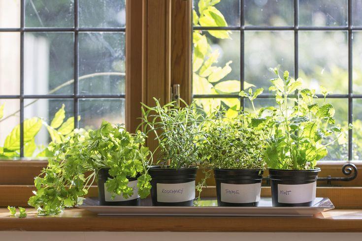 5 piante aromatiche da coltivare in casa in autunno - Salvia, prezzemolo, timo, rosmarino e origano possono essere coltivati in autunno e pronti in primavera