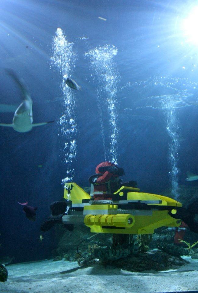 25 Best Images About Sea Life Aquarium On Pinterest