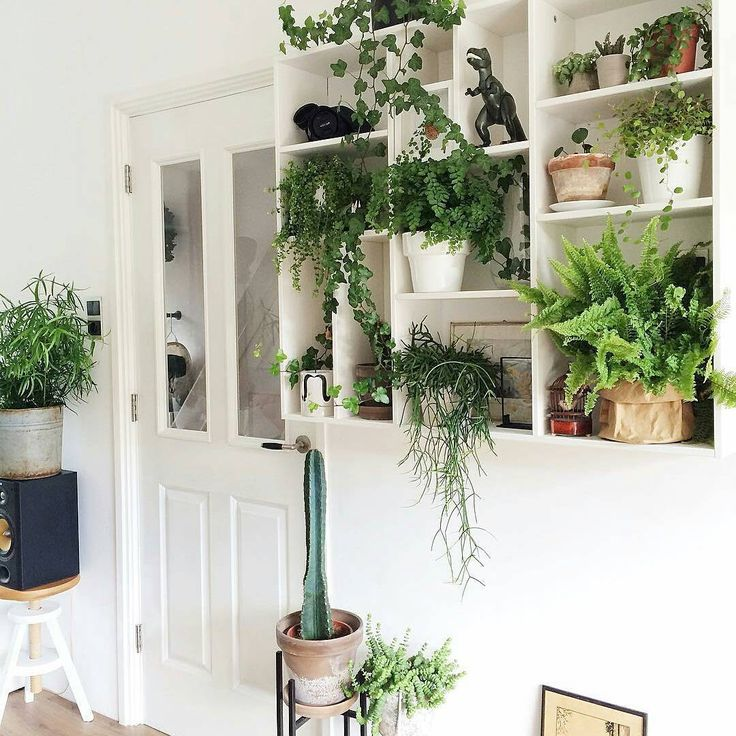 This Urban jungle was shared by Houseof