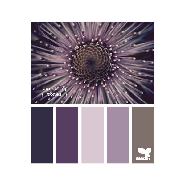 Design Seeds ❤ liked on Polyvore featuring colors, design seeds, palettes, colours and backgrounds