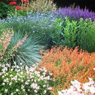 Xeriscape Flower Garden