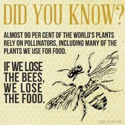 Food and Pollinators-May 14th 2015 on the news saying that in one years time 40% of the bees have died !!! We are in trouble if since May 14th of 2014 we have lost 40 % of the worlds bees !!!