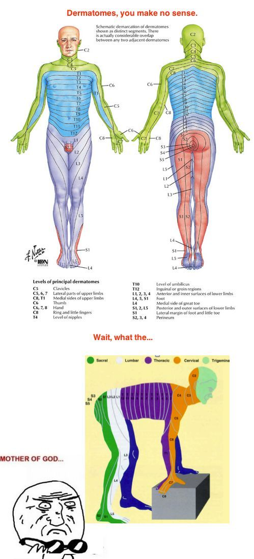 13 best Physical Therapy images on Pinterest Career, Physical - sample resume physical therapist