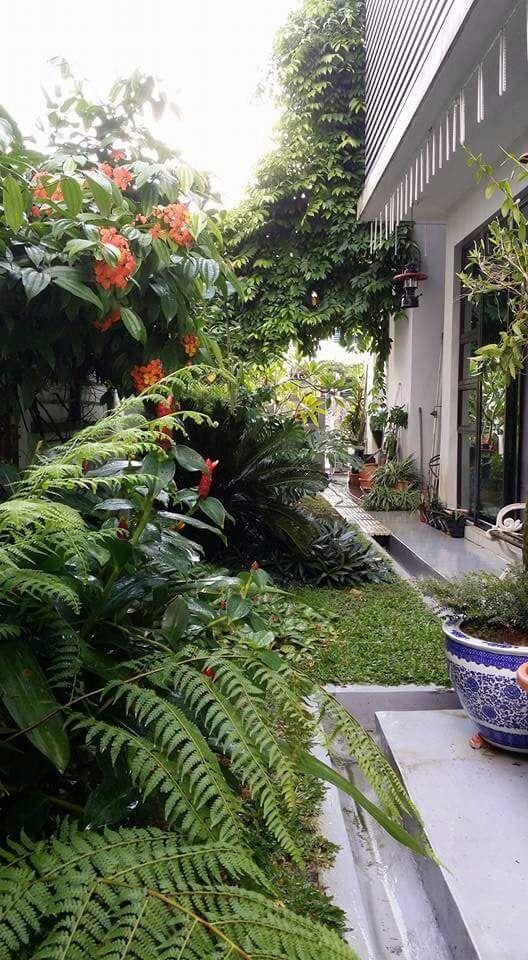 Project Home Garden | Photos
