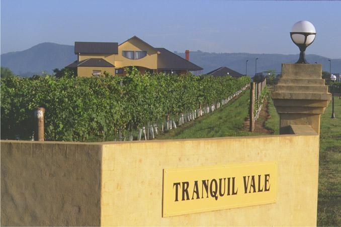 Tranquil Vale Vineyard in Maitland #maitland #vineyard