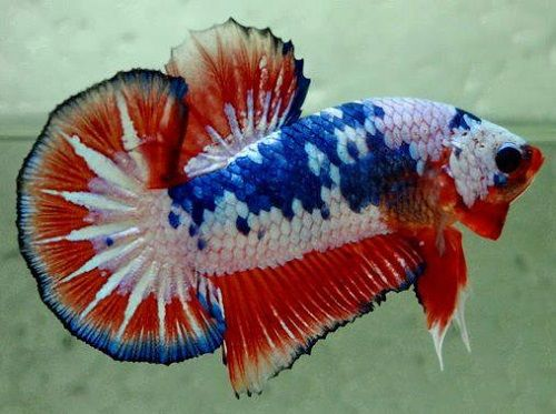 Top 25 best freshwater fish tank ideas on pinterest for What kind of fish can live with a betta