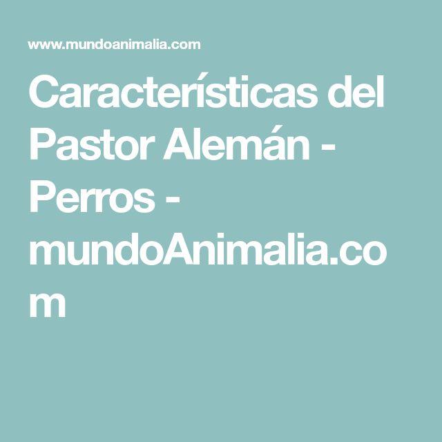 Características del Pastor Alemán - Perros - mundoAnimalia.com