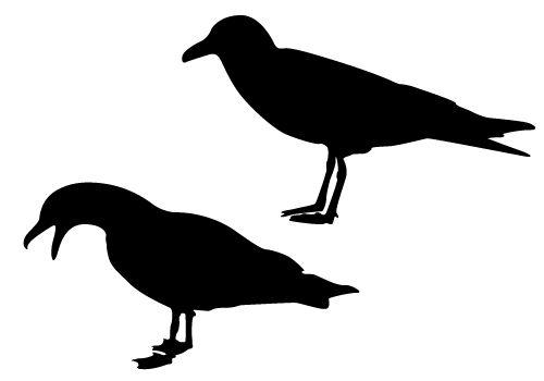seagull silhouette clip art - 500×350