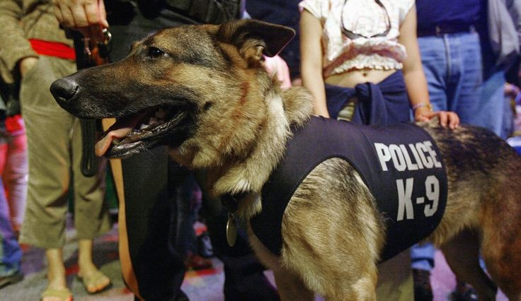 Man Sues Punta Gorda Police Department After K9 Dog Nearly Killed Him In Traffic Stop Over Bicycle Light