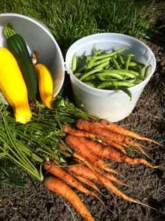 Growing Vegetables - Everything you need to know