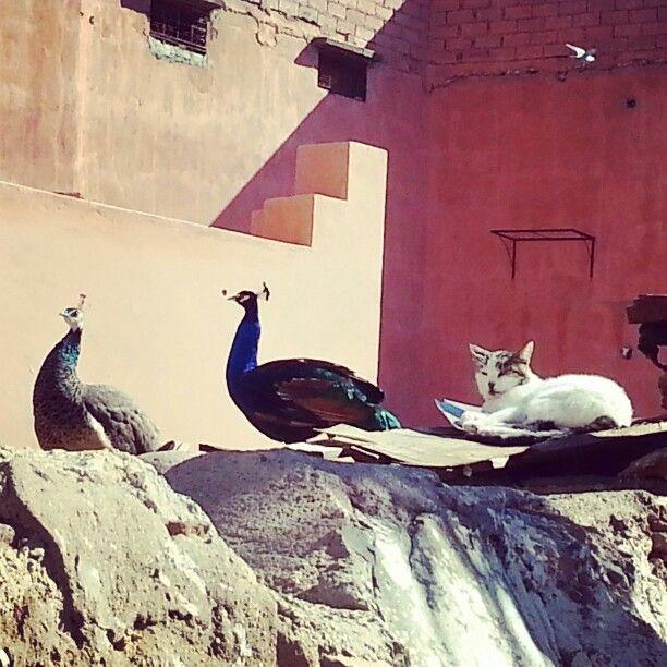 dans le quartier des Tanneurs à  Marrakech