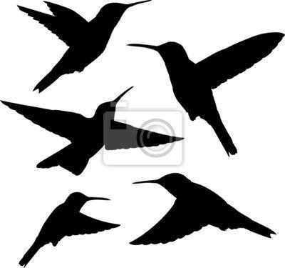 kolibřík siluety