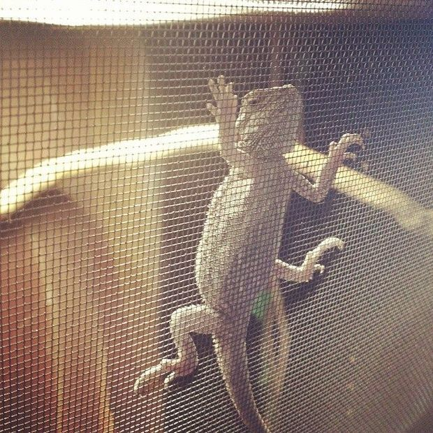 Turning a bookshelf into a lizard habitat.