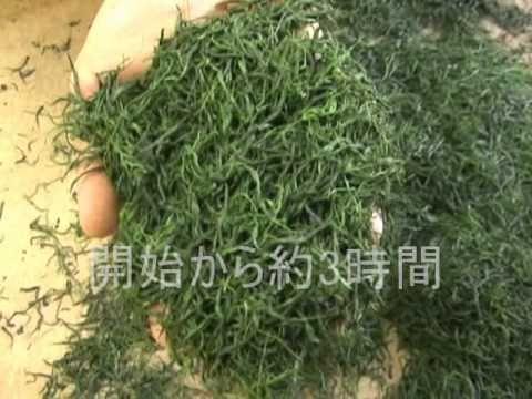 約6時間かかるお茶の手揉みを約6分程度にまとめました。 ◆茶の手揉み技術の習得に力を入れる(有)中森製茶のホームページはこちら http://www.nakamoriseicha.com/