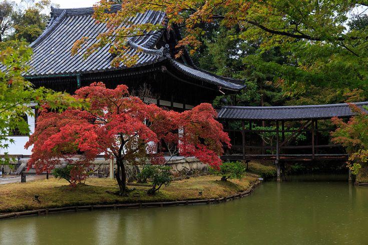 雨降りの中、高台寺へ。 綺麗に色づいた紅葉が池の畔で待っていてくれました。 (※11月2日撮影) しとしと雨。 まぁ、このくらいなら撮...