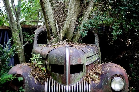 Trees grow through the windshield of a 1937 Chrysler Imperial. (AP Photo/David Goldman)